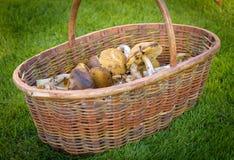 可食的森林的混合在篮子采蘑菇 免版税库存照片