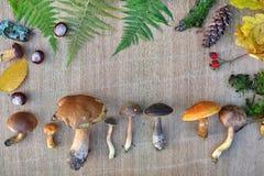可食的森林蘑菇、叶子和锥体自然框架  免版税库存图片