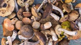 可食的森林蘑菇的混合 库存照片