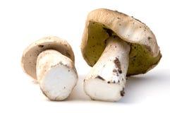 可食的牛肝菌蕈类 免版税图库摄影