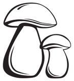 可食的牛肝菌蕈类 向量例证