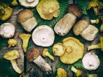 可食的狂放的蘑菇,牛肝菌蕈类, russule,在木背景的黄蘑菇 免版税库存照片