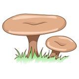 可食的蘑菇传染媒介例证 免版税库存照片