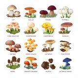 可食的蘑菇和伞菌的汇集 库存照片