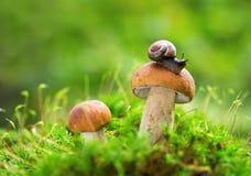 可食的蘑菇在绿色背景的一个森林里 库存照片