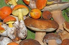 可食的蘑菇背景 库存图片