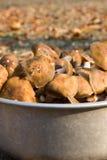 可食的蘑菇 免版税库存图片