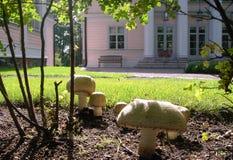 可食的蘑菇 库存图片