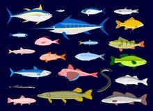 可食的鱼 库存例证