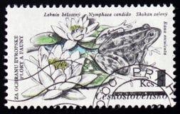 可食的Pelophylax kl esculentus,以前esculenta的蛙属,荷花,星莲属假丝酵母,大约1983年 库存图片