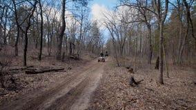 可食秋天的日期待真菌蘑菇挑库员晴朗的二木头 在quadrocycle的两个车手在秋天森林人在森林公路的方形字体自行车乘坐 股票录像