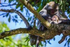 台南猴子 免版税库存图片