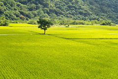 台湾农村风景 库存照片