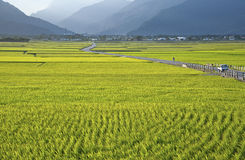 台湾农村风景 免版税库存图片