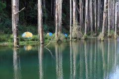 台湾抑制湖的上瘾者森林 免版税库存图片