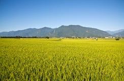 台湾的美丽的乡下 免版税图库摄影