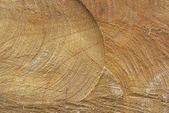 台湾高山冷杉木头纹理 免版税库存照片