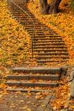 台阶充满秋叶 库存图片