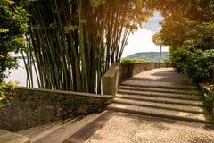 台阶和自然 图库摄影