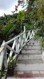 台阶在一个异乎寻常的森林里 库存图片