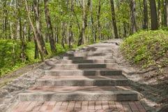 台阶在公园 库存图片