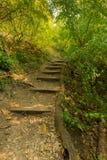 台阶在森林、好的颜色、树和草里在秋天,不可思议的软的颜色 库存照片