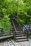 台阶在森林里 免版税库存图片