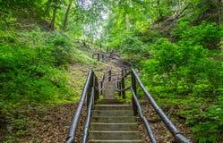 台阶在森林里 库存照片