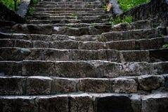 台阶在森林里 库存图片