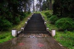 台阶在植物园巴统里 库存图片