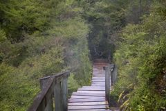 台阶在深森林里,有地热蒸汽的 库存图片