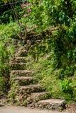 台阶在热带庭院里 免版税图库摄影