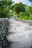 台阶在热带庭院里 库存图片