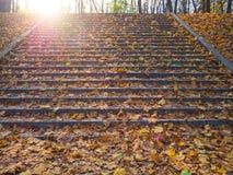 台阶在用秋叶盖的公园 免版税库存图片
