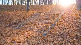台阶在用秋叶盖的公园 免版税库存照片