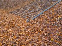 台阶在用秋叶盖的公园 库存图片