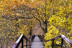 台阶在秋天 免版税图库摄影
