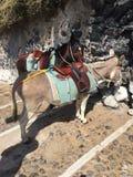 驴台阶旅行圣托里尼 图库摄影