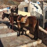 驴台阶旅行圣托里尼 库存图片