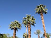 台阶步棕榈树 免版税图库摄影