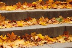 台阶用秋叶装载了 库存图片