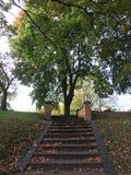 台阶用许多叶子观看在公园,秋天的 免版税库存图片