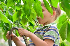 台阶的快乐和快乐的男孩在庭院里吃在树的一棵樱桃树 库存图片