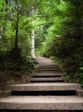 台阶通过森林-温哥华 免版税库存照片