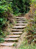 台阶通过森林 免版税库存照片