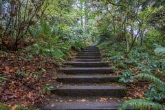台阶通过森林 库存照片