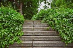 台阶长满与葡萄树 库存图片