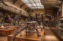 史前骨骼和化石在古生物学和比较解剖学画廊在巴黎 图库摄影