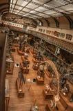 史前骨骼和化石在古生物学和比较解剖学画廊在巴黎 免版税图库摄影