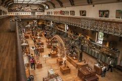 史前骨骼和化石在古生物学和比较解剖学画廊在巴黎 免版税库存图片
